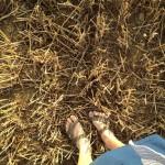 hay field umbria italy