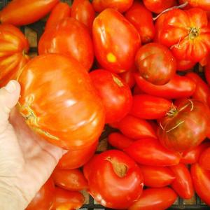 [cml_media_alt id='4821']italian red tomatoes[/cml_media_alt]